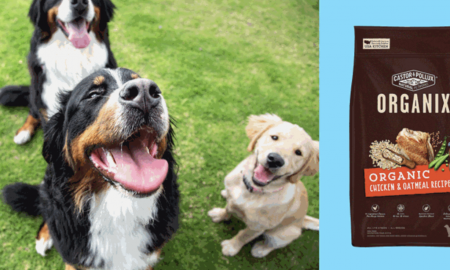 What Are the Healthiest Pet Foods for Dogs?