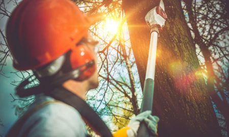 5 Key Things to Look For in a Tree Removal Service
