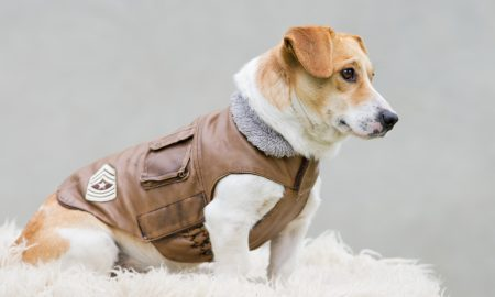 How To Choose Safe Material For Dog Coats Canada And Jackets
