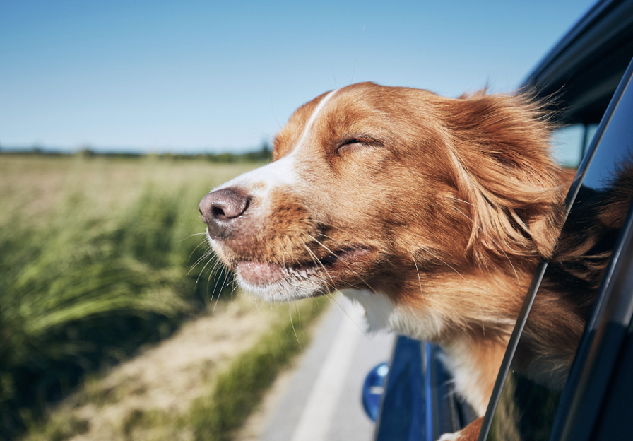 10 Tips for Vacationing with Your Family Pet